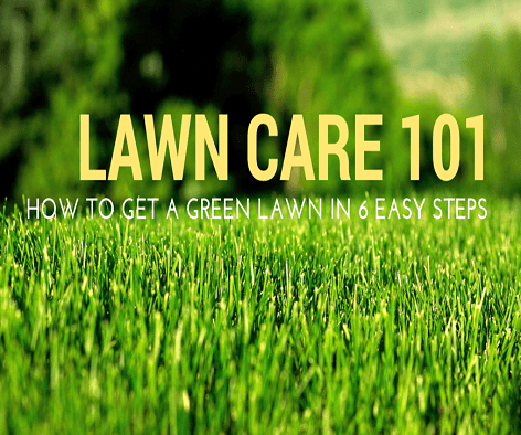 Lawn Care 101: How to Get Your Lawn Green
