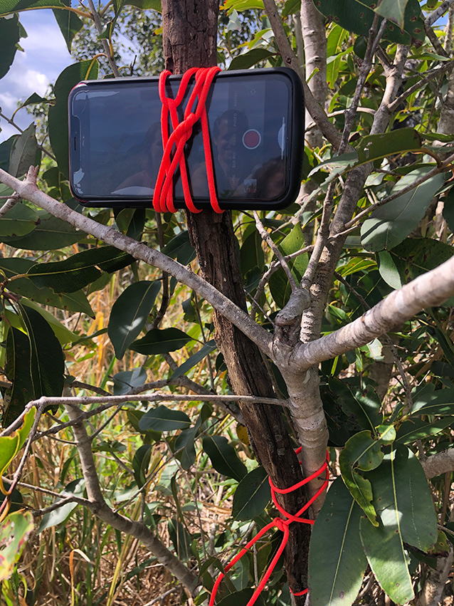 iPhone tied to a tree branch with red cord and a stick